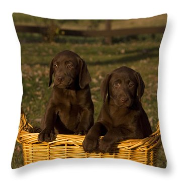 Chocolate Labrador Retriever Pups Throw Pillow by Linda Freshwaters Arndt