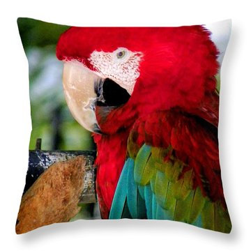 Chowtime Throw Pillow by Karen Wiles
