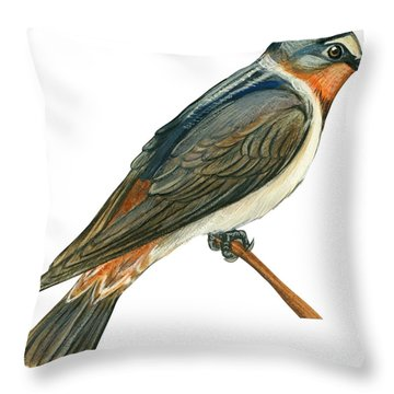 Cliff Swallow  Throw Pillow by Anonymous