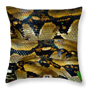 Close-up Of A Boa Constrictor, Arenal Throw Pillow by Panoramic Images