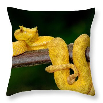 Close-up Of An Eyelash Viper Throw Pillow by Panoramic Images