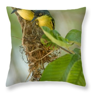 Close-up Of Two Common Tody-flycatchers Throw Pillow by Panoramic Images