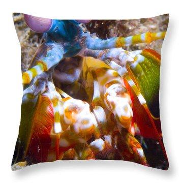 Close-up View Of A Mantis Shrimp Throw Pillow by Steve Jones
