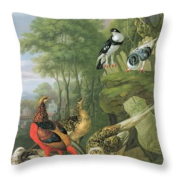 Cock Pheasant Hen Pheasant And Chicks And Other Birds In A Classical Landscape Throw Pillow by Pieter Casteels