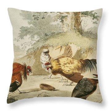 Cocks Fighting Throw Pillow by Melchior de Hondecoeter