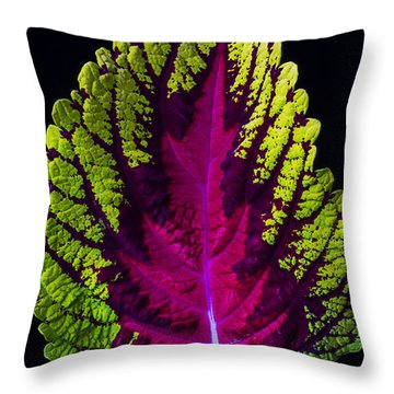 Coleus Leaf Throw Pillow by Garry Gay