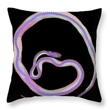 Colored X-ray Of A Corn Snake Throw Pillow by D Roberts