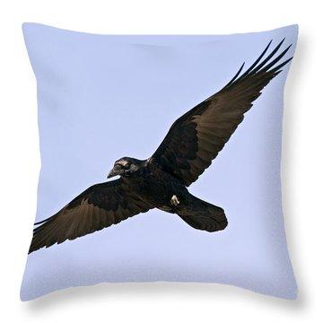 Common Raven Throw Pillow by Jim Zipp