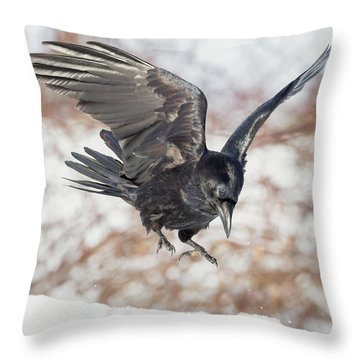 Common Raven Square Throw Pillow by Bill Wakeley