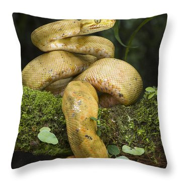 Common Tree Boa -yellow Morph Throw Pillow by Pete Oxford