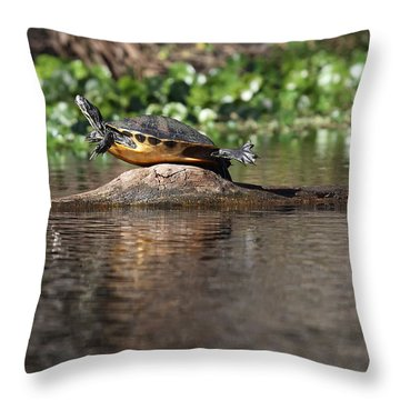 Cooter On Alligator Log Throw Pillow by Paul Rebmann