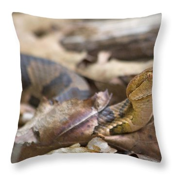 Copperhead In The Wild Throw Pillow by Betsy Knapp