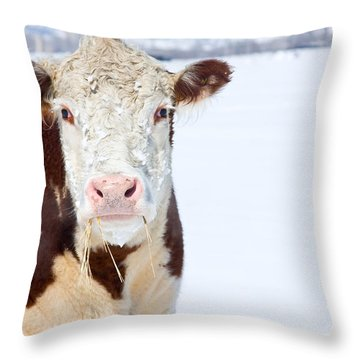 Cow - Fine Art Photography Print Throw Pillow by James BO  Insogna