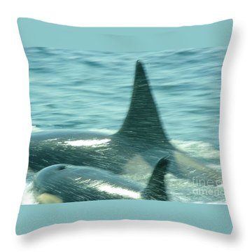 Cow Orca And Her Calf Throw Pillow by Jeff Swan