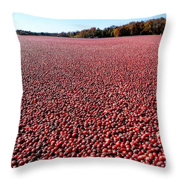 Cranberry Bog In New Jersey Throw Pillow by Olivier Le Queinec