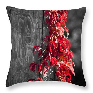 Creeper On Pole Desaturated Throw Pillow by Teresa Mucha