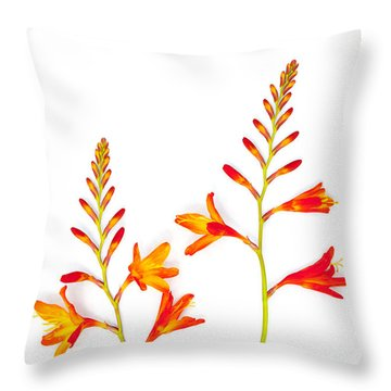 Crocosmia On White Throw Pillow by Carol Leigh
