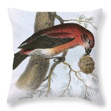 Crossbill Throw Pillow by English School