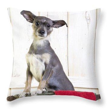 Cute Dog Washtub Throw Pillow by Edward Fielding