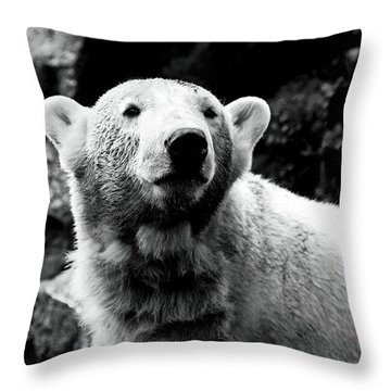 Cute Knut Throw Pillow by John Rizzuto