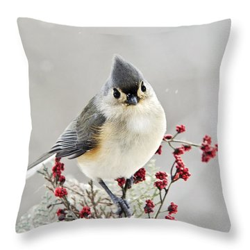 Cute Winter Bird - Tufted Titmouse Throw Pillow by Christina Rollo
