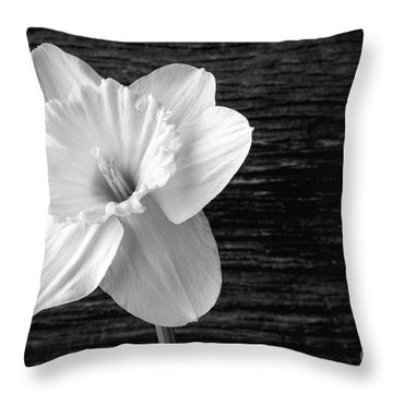 Daffodil Narcissus Flower Black And White Throw Pillow by Edward Fielding