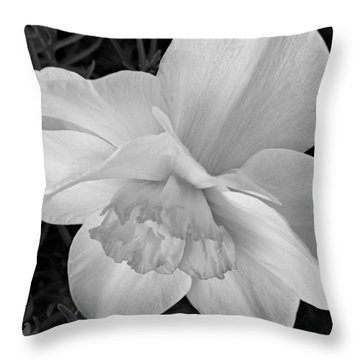 Daffodil Study Throw Pillow by Chris Berry
