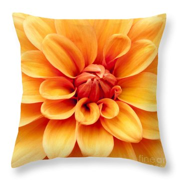 Dahlia Squared Throw Pillow by Anne Gilbert