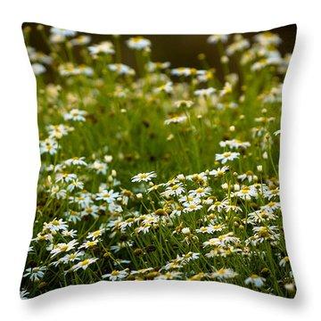 Daisy Sunrise Throw Pillow by Sebastian Musial