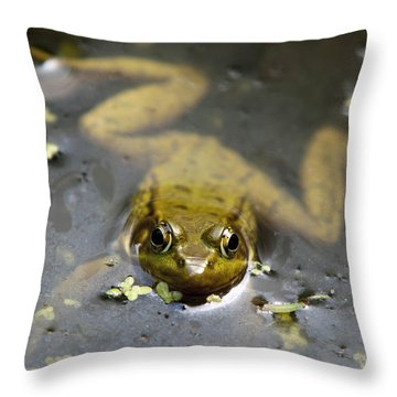 Daybreak Frog Throw Pillow by Christina Rollo