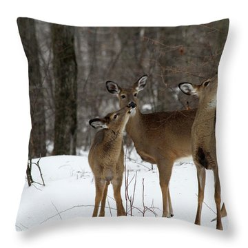 Deer Affection Throw Pillow by Karol Livote