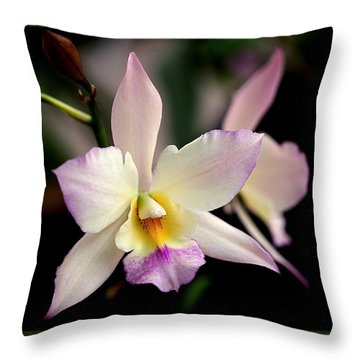 Delicate Beauty Throw Pillow by Rona Black