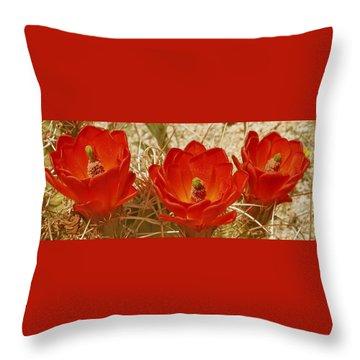 Desert Blooms Throw Pillow by Ben and Raisa Gertsberg