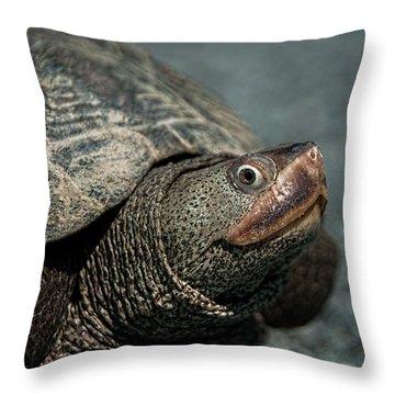 Diamondback Terrapin Throw Pillow by Lara Ellis