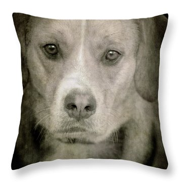 Dog Posing Throw Pillow by Loriental Photography