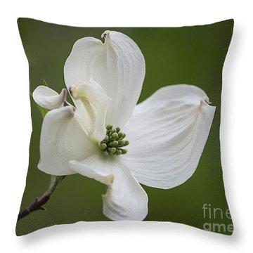 Dogwood Blossom Throw Pillow by Arlene Carmel