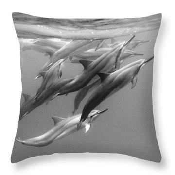 Dolphin Pod Throw Pillow by Sean Davey
