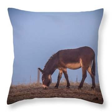Donkey In The Fog Throw Pillow by Robert Bales