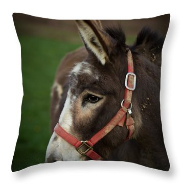 Donkey Throw Pillow by Shane Holsclaw