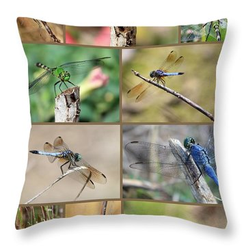 Dragonfly Collage 3 Throw Pillow by Carol Groenen