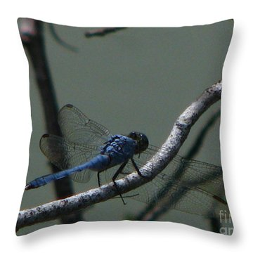 Dragonfly Throw Pillow by Greg Patzer