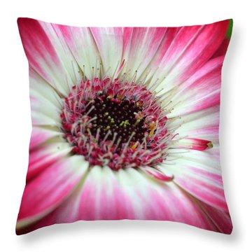 Dsc240d Throw Pillow by Kimberlie Gerner