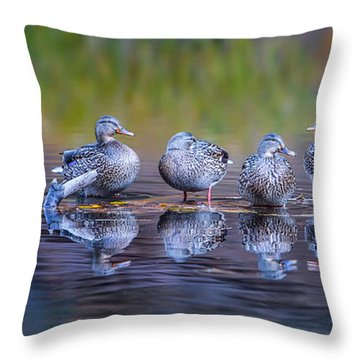 Ducks In A Row Throw Pillow by Larry Marshall