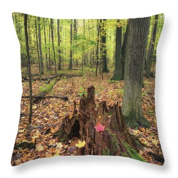 Early Autumn Woods Throw Pillow by Michele Steffey