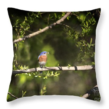Eastern Blue Bird At Sunrise Throw Pillow by Cris Hayes