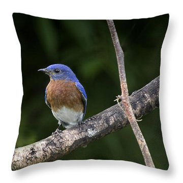 Eastern Blue Delight Throw Pillow by Cris Hayes