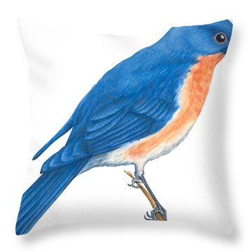 Eastern Bluebird Throw Pillow by Anonymous