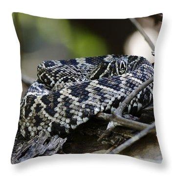 Eastern Diamondback-1 Throw Pillow by Rudy Umans