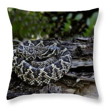 Eastern Diamondback-2 Throw Pillow by Rudy Umans