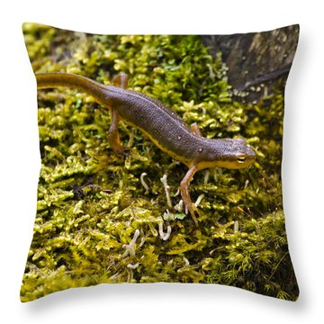 Eastern Newt Aquatic Adult Throw Pillow by Christina Rollo